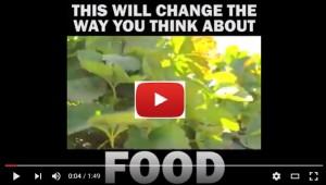 סרטון על בזבוז מזון